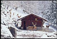 PEJO_n11 Val di Pejo in inverno, immagini dei villaggi,delle montagne, delle baite, delle piste di sci e attività sportive,<br /> Pejo in winter, images of the villages, mountains, mountain huts, the ski slopes and sporting activities,<br /> Pejo im Winter, Bilder der Dörfer, Berge, Berghütten, den Skipisten und sportlichen Aktivitäten,<br /> Pejo en hiver, les images des villages, des montagnes, des cabanes de montagne, les pistes de ski et des activités sportives,<br /> Pejo en invierno, las imágenes de los pueblos, montañas, refugios de montaña, las pistas de esquí y actividades deportivas,<br /> Pejo fi fasl alshshata'a, sur min alquraa waljibal wal'akwakh aljabaliat, wamunhadarat alttazalluj wal'anshitat alrriadia,<br /> Pejo的冬天,鄉村,山區,山木屋,滑雪場和體育活動的圖像,<br /> 冬のペヨ、村、山、山の小屋、スキー場やスポーツ活動のイメージ,<br /> Pejo in de winter, beelden van de dorpen, bergen, berghutten, de skipistes en sportieve activiteiten,<br /> Pejo w zimie, obrazy wsi, gór, schronisk górskich, stoków narciarskich i uprawiania sportu,<br /> Pejo no inverno, as imagens das aldeias, montanhas, abrigos de montanha, pistas de esqui e actividades desportivas,<br /> Pejo télen, a képek a falvak, hegyek, hegyi, a sípályák és sporttevékenységek