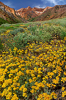 Landscapes: Eastern Sierras, California