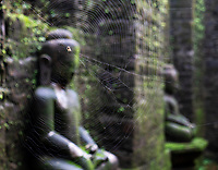 Koe Thaung 90000 images of Buddha Temple, Mrauk U, Rakhine State Myanmar Spider web in the corridors
