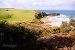 Image Ref: CA933<br /> Location: Bushrangers Bay Track<br /> Date of Shot: 07.09.19