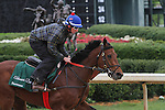 HOT SPRINGS, AR - APRIL 14:  Discreetness gallops at Oaklawn Park on April 14, 2016 in Hot Springs, AR. (Photo by Ciara Bowen/Eclipse Sportswire/Getty Images)