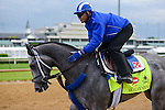 LOUISVILLE, KY - MAY 04: Mohaymen, trained by Kiaran McLaughlin and owned by Shadwell Stable, exercises and prepares during morning workouts for the Kentucky Derby and Kentucky Oaks at Churchill Downs on May 4, 2016 in Louisville, Kentucky.(Photo by Samantha Bussanch/Eclipse Sportswire/Getty Images)