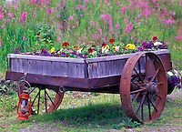 Cart with variety of flowers and fireweed in back. Gracious House Lodge, Alaska
