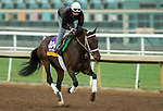ARCADIA, CA - NOV 01: Forever Unbridled, owned by Charles E. Fipke and trained by Dallas Stewart, exercises in preparation for the Breeders' Cup Longines Distaff at Santa Anita Park on November 1, 2016 in Arcadia, California. (Photo by Kazushi Ishida/Eclipse Sportswire/Breeders Cup)