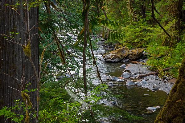 Upper Sol Duc River.  Olympic Peninsula, Washington.  Sept.