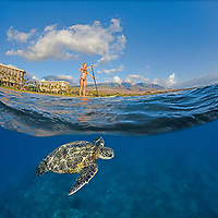 A green sea turtle, Chelonia mydas, glides below surf instructor Tara Angioletti on a stand-up paddle board off Canoe Bearch, Maui. Hawaii, Pacific Ocean This photograph is model released.