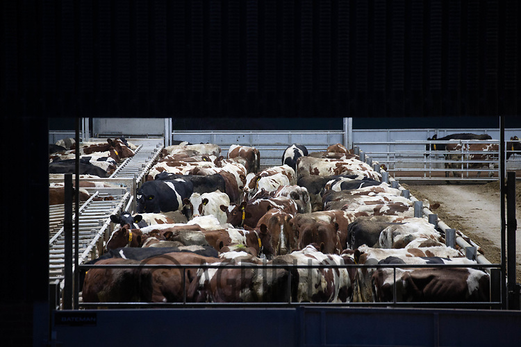 10/12/2020 Dairy unit at night<br /> ©Tim Scrivener Photographer 07850 303986<br />      ....Covering Agriculture In The UK....