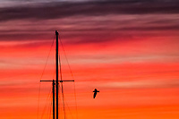 A gull flies by a sailboat mast against a fiery sunset sky at the San Leandro Marina on San Francisco Bay.