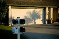 Shadow of palm tree on garage door