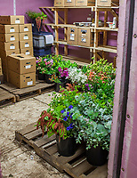 Cut flowers in refrigerated cooler, No-till flower farming, Singing Frogs Farm