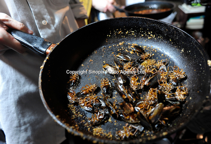 Cock-roaches are fried at a bug eating party in Tokyo, Japan. The bug eating movement is gaining in popularity in Japan where bug eating gourmet cooking parties are sold-out.  The insects are seen as the ultimate challenge in the world's gastronomical capitol but alo seen as an important alternative source of protein for the future and even the Japanese Space Program is looking into using insects as food in space travel.