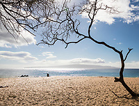 Beyond keawe trees, beachgoers enjoy a clear day at Makena Beach, Maui, with Kaho'olawe in the distance.