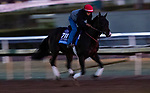 OCT 27: Breeders' Cup Juvenile  entrant Wrecking Crew, trained by Peter Miller, at Santa Anita Park in Arcadia, California on Oct 27, 2019. Evers/Eclipse Sportswire/Breeders' Cup