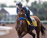ARCADIA, CA - OCT 31: Hoppertunity, owned by Michael E. Pegram, Karl Watson & Paul Weitman and trained by Bob Baffert, exercises in preparation for the Breeders' Cup Classic at Santa Anita Park on October 31, 2016 in Arcadia, California. (Photo by Douglas DeFelice/Eclipse Sportswire/Breeders Cup)