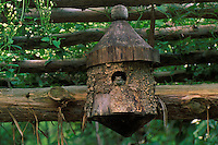 Toad living high in new home a rustic birdhouse