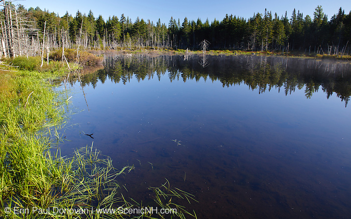 Reflection of softwood forest in a small pond along Cherry Mountain Road in the White Mountains, New Hampshire.