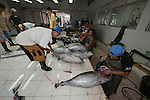 Benoa tuna fish processing plant of tuna from longliner boats. Yellowfin or Bigeye tuna are graded - high grade for export and low grade for selling to the local market. Processing means gutting out the fish head parts and quick freezing the fish in ice before packing them for export.