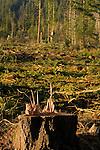 Deforestation for the Lumber Industry