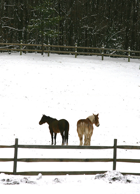 A pair of horses walk  along in the snow at Washington Stables located along Bordentown Ave in Sayreville.<br />  <br /> METRO<br /> 5802<br /> ON MON MAR. 2,2009<br /> MARK R. SULLIVAN/CHIEF PHOTOGRAPHER