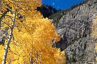 Aspen and mountainside near Crystal, Colorado