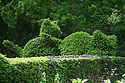 Yew topiary cats, Vann House and Garden, Surrey, mid June.