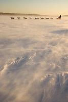 Tove Sorensen runs on Yukon River in blowing snow 2006 Iditarod Alaska Winter
