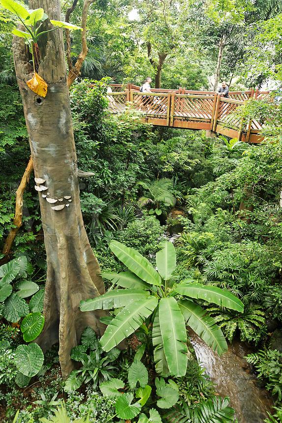 Elevated walkway above tree canopy at Edward Youde Aviary, Hong Kong Park, Hong Kong SAR, People's Repbulic of China, Asia