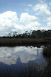 Cumulus clouds are reflected in the still water of a juncus marsh.