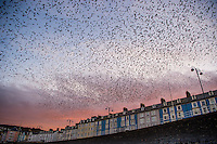 Aberystwyth Wales UK, Tuesday 16 February 2016<br /> UK Weather: After the coldest night of the year so far this winter, with temperatures dropping in places to -6ºc, tens of thousands of starlings emerge en-masse at dawn from their overnight roost under the pier in Aberystwyth Wales