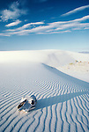 Sun-bleached horse skull rests on gypsum dunes, White Sands National Monument, New Mexico, USA