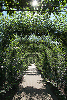 Allee arbor of apple fruit trees with starbust, blue sky