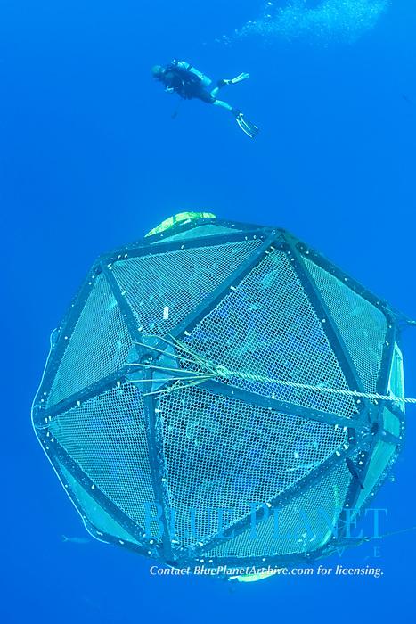 drifting, unanchored underwater fish cage or aquapod, used for open ocean fish pen aquaculture by Kampachi Farms LLC, holds Kona kampachi, Seriola rivoliana, also known as Hawaiian yellowtail, kahala, or almaco jack, Kona Coast, Hawaii Island (the Big Island), Hawaiian Islands (Central Pacific Ocean)