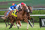 #4 Global Access wins the Saranac S. (gr 3) ridden by John Velazquez, trained Michael Trombetta. Aug 31,2109: during racing at Saratoga Race Course in Saratoga Springs, New York. Robert Simmons/Eclipse Sportswire/CSM