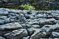 Karst rock patterns and Hawthorne tree. The Burren, County Clare, Ireland