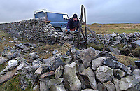 Nigel Fairbank of Hebden, Grassington, North Yorkshire stone walling for John Blakey at Greenhow in wet and cold weather. This section will make up part of the 800 to 900 metres of wall he does per year.
