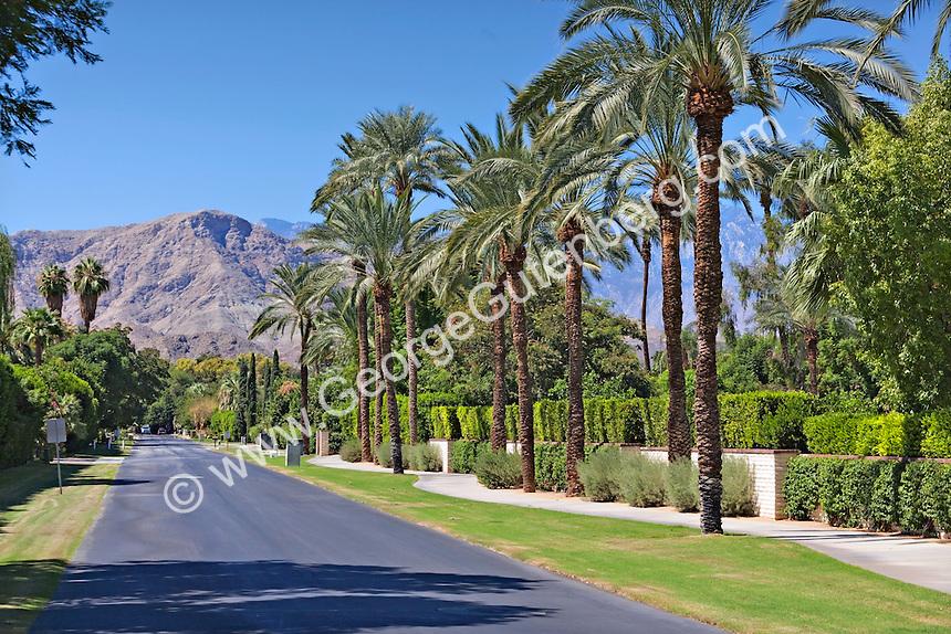 Palm tree lined street overlooks mountain