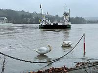 01.02.2021: Hochwasser am Kornsand an der Fähre