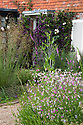 Nicotiana, Stipa gigantea, Clematis 'Étoile Violette' and Foxgloves, Fairlight End, Pett, East Sussex, late June.