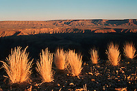 Grass at last light, Sossusvlei, Namib Naukluft National Park, Namibia, Africa
