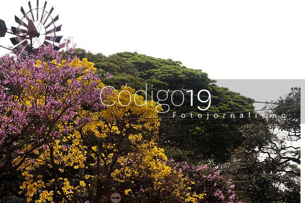 Campinas (SP), 25/08/2021 - Ipes Amarelo - Florada de Ipes Amarelos em Barão Geraldo, proximo a entrada da Unicamp, na cidade de Campinas (SP), nesta quarta-feira (25).