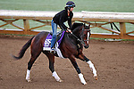 ARCADIA, CA - OCT 31: Texas Chrome, owned by Keene Thoroughbreds LLC and trained by J. R. Caldwell, exercises in preparation for the Breeders' Cup Las Vegas Dirt Mile at Santa Anita Park on October 31, 2016 in Arcadia, California. (Photo by Scott Serio/Eclipse Sportswire/Breeders Cup)