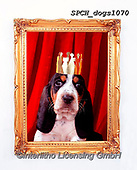 Xavier, ANIMALS, REALISTISCHE TIERE, ANIMALES REALISTICOS, dogs, photos+++++,SPCHDOGS1070,#a#, EVERYDAY