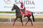 RIYADH, SA February 19 2021: PRINCE OF ARRAN (GB) Track work from King Abddulaziz Racetrack, Riyadh, Saudi Arabia. Shamela Hanley/Eclipse Sportswire/CSM