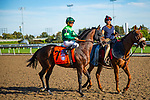 TORONT,CANADA-SEP 14: Raging Bull is post parading before the Woodbine Mile at Woodbine Race Track on September 14,2019 in Toronto,Ontario,Canada. Kaz Ishida/Eclipse Sportswire/CSM