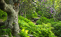 Summer trail at Craggy Gardens, Blue Ridge Parkway
