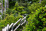 Stairs drop through raid forest down a rain forest bluff to Terrace Beach in He-Tin-Kis Park on the west coast of Vancouver Island, Canada, near Pacific Rim National Park.