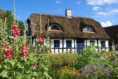 Denmark, Jutland, Alling, near Ry:Traditional half timbered thatched cottage with Hollyhocks | Daenemark, Juetland, Alling, bei Ry: traditionelles Reet gedecktes Haus mit zwei Ochsenaugen