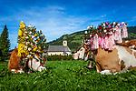 AUT, Oesterreich, Tirol, Westendorf: Almabtrieb | AUT, Austria, Tyrol, Westendorf: return of livestock from high alpine summer pastures