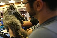 SAO PAULO, SP, 17.05.2014 - FEIRA DE GATOS - Cerca de 300 gatos de raças sao exposto em uma feira  na Avenida Paulista na tarde deste sabado.(Foto: Vanessa Carvalho / Brazil Photo Press).