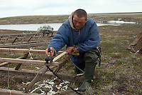 Bovanenkovo ,Yamal Peninsula, Russia, 09/07/2010..A member of the Nenets, indigenous nomadic reindeer herders, prepares to leave their overnight camp on sledges heading north to the Russian Arctic coast.